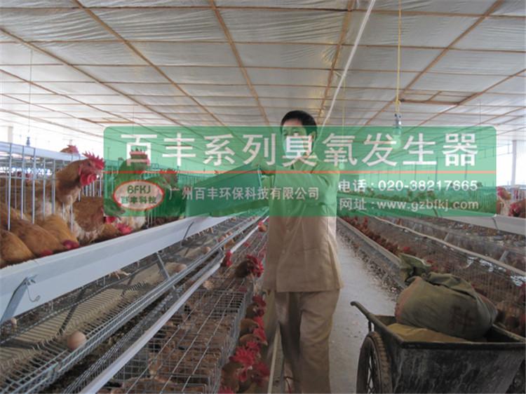 养鸡场1.jpg